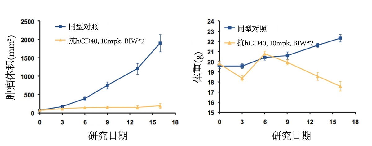 Evaluation of anti-human-CD40 efficacy.