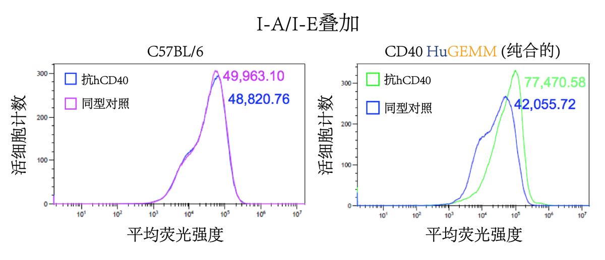 Ex vivo binding assay confirms activation of spleen derived B cells following h/mCD40 engagement.