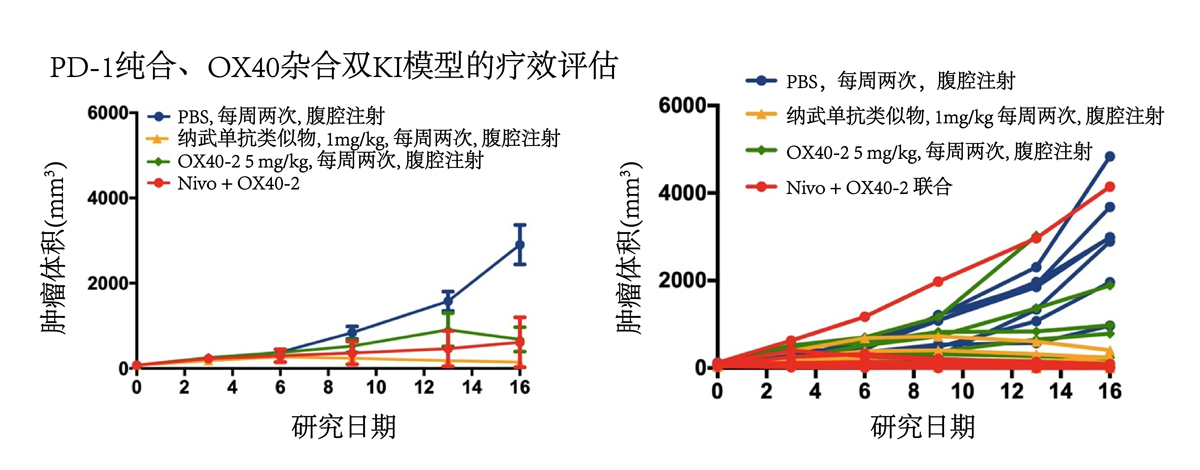 Performance of anti-OX40 and Nivolumab in a PD-1/OX40 knock-in mouse model