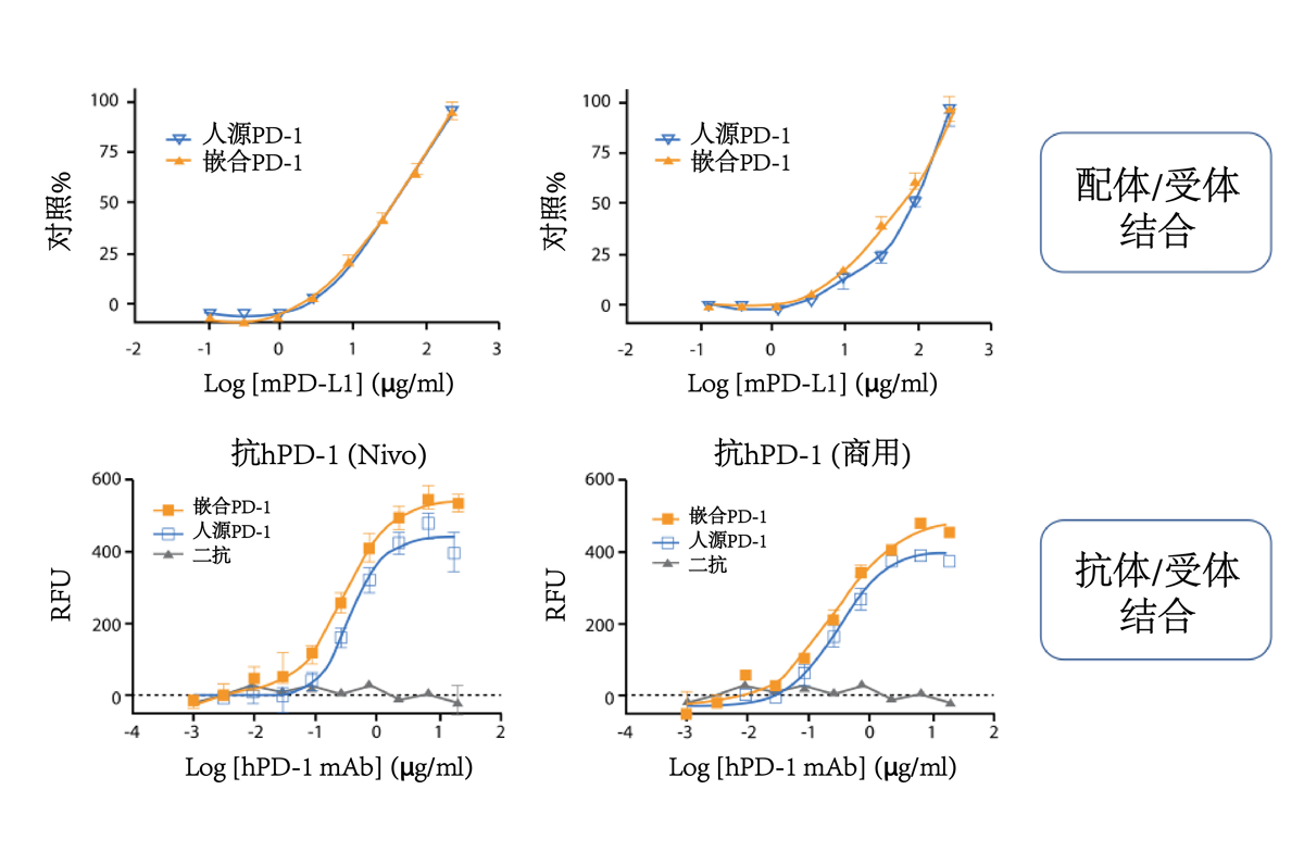 h/mPD-1 protein binding and recognition by anti-human PD-1 antibodies